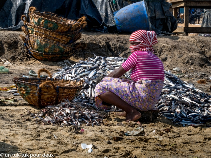 marché poissons-4.jpg