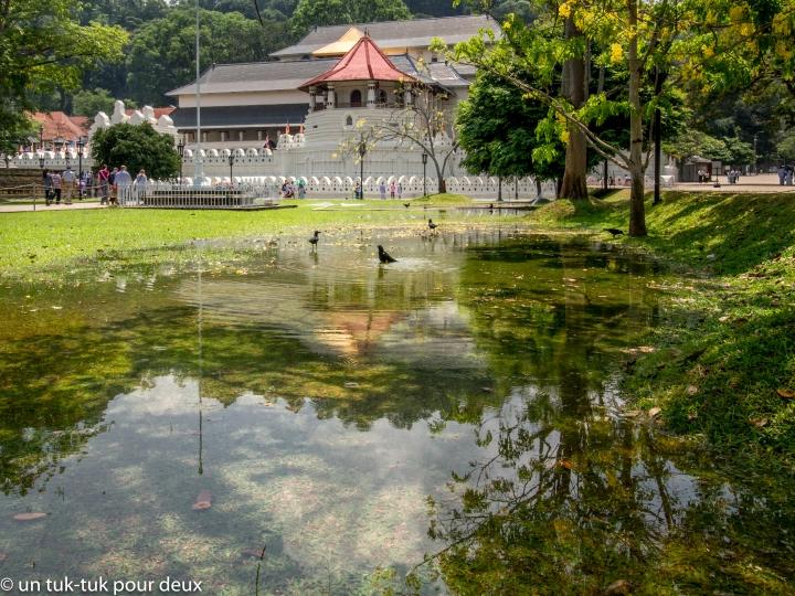 temple dent-19.jpg