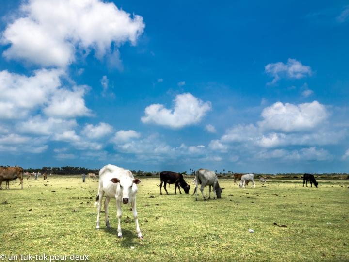 Jaffna-40.jpg