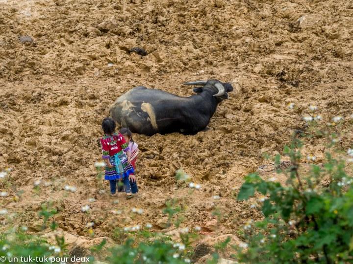 Buffle et enfants dans la boue