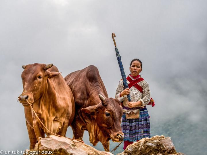 H'mong fleurs et ses vaches