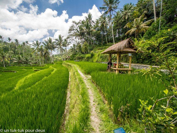 Journée dans le Nord-estd'Ubud