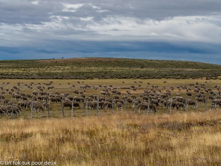 La Patagonie, c'est parti monkiki!
