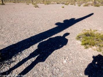 Pour vous donner un idée de la hauteur des cactus