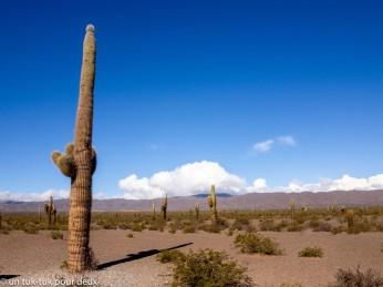 Cactus Cordon