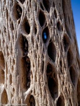 Tronc du cactus