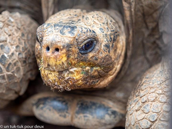 Galápagos : sur la Isla Santa Cruz, les animaux nous font del'oeil