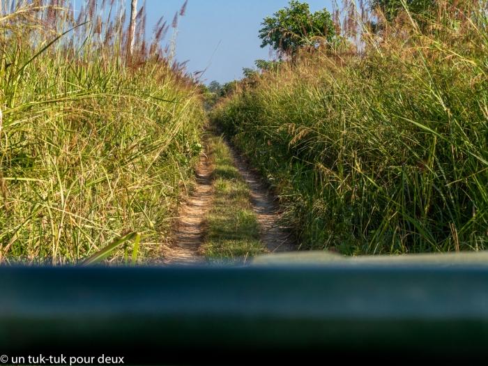 Chitwan-37.jpg