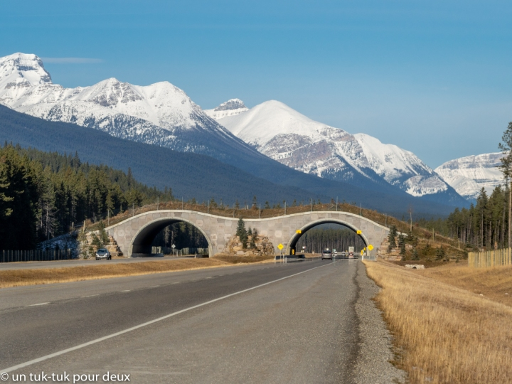 Parc national de Banff : des lacs, des canyons, des montagnes et de labeauté
