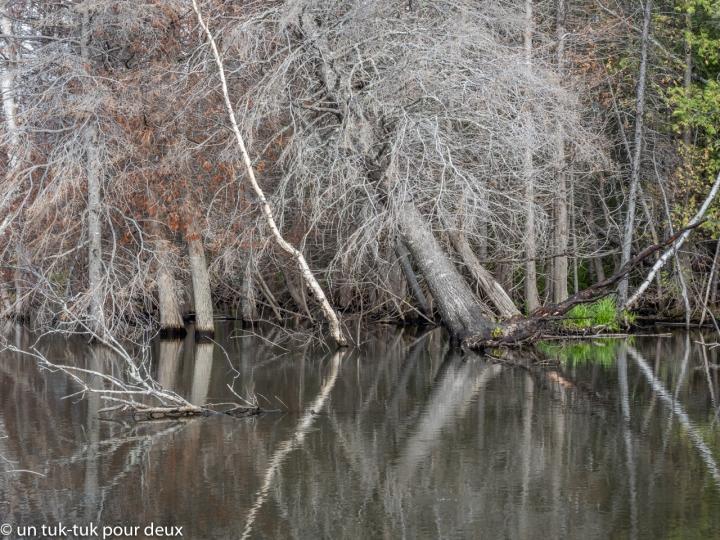 Lac Castors, Forillon